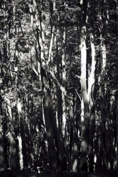 Wolfgang Tillmans, 'Wald (Tierra del Fuego) II', 2010