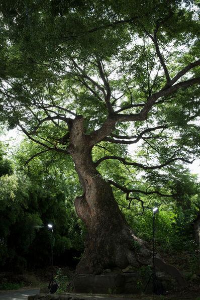 Yunho Kim, ' Gomok (Old Tree)', 2017