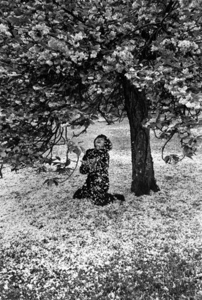 Edouard Boubat, 'Cerisier en fleurs', 1983