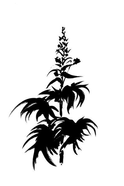 Veronique Gambier, 'Botanical Study · Delphinium #1_Edition 1 of 10', 2019
