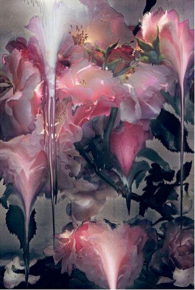 Nick Knight, 'Rose VI', 2012