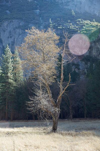 Catherine Opie, 'Tree', 2015