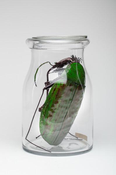 Dana Meyer, 'chauvinistischer Grün-Rüsselkäfer (Chauvis curculio viridis)', 2019