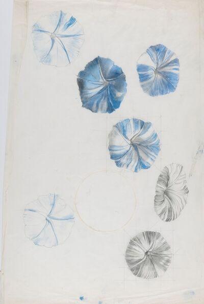 Marion Elizabeth Adnams, 'Study of nasturtium', 1930