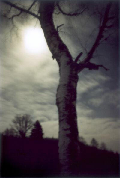 Jitka Hanzlová, 'Forest #1, Untitled (Moon Shine)', 2000