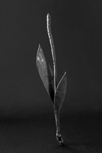 Maria Jose de la Macorra, 'Bronce Herbarium', 2014-2018