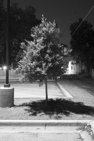 Adam Neese, 'Four Well Lit Trees in Texas and One in Tennesee 3', 2015