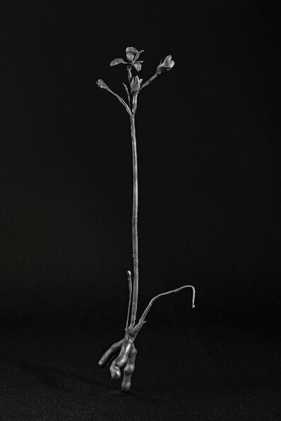 Maria Jose de la Macorra, 'Herbario de bronce', 2014-2018