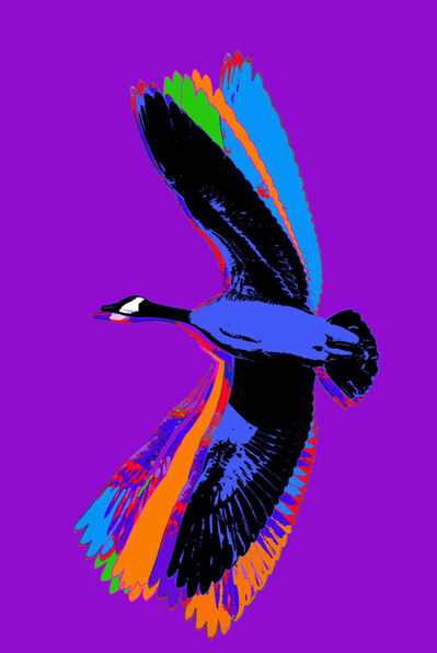 James Lahey, 'Flight (Canada Goose from Made in Canada part 2) 190808-(purple)', 2019