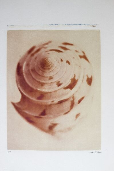 Marco D'Anna, 'Malta, shell', 2005