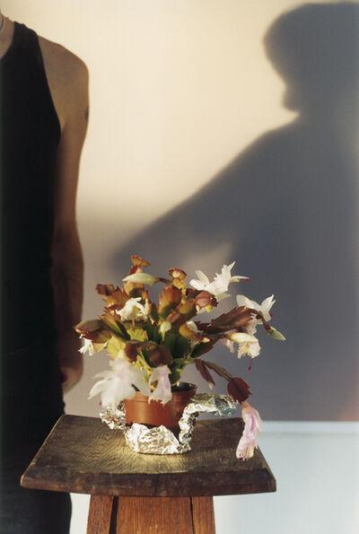 Wolfgang Tillmans, 'TIGA CACTUS', 2005
