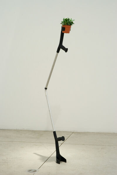 Jaime Pitarch, 'Vegetable with Prosthesis', 2009