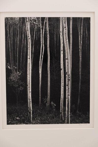 Don Worth, 'Aspens, Autmn, New Mexico', 1958