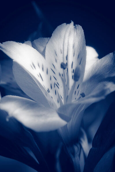 Indira Cesarine, 'The Blue Lily', 2020