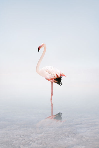 Alice Zilberberg, 'Wondering White Flamingo', 2020