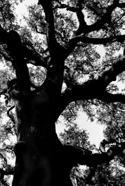 Patrick Linehan, 'Trees - Florida #5'