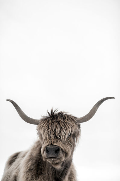 Guadalupe Laiz, 'Highland Cattle', 2017