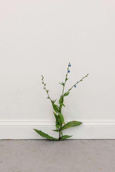 Tony Matelli, 'Weed 518', 2020