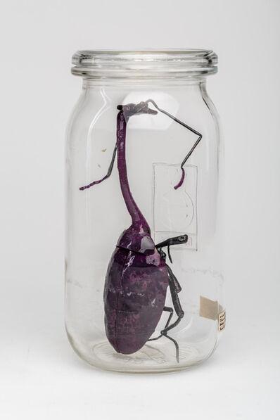 Dana Meyer, 'violetter Drachenhals (Trachelophorus violaceus volansalqm) ', 2019