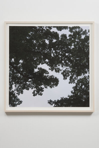 Spencer Finch, 'Oak Tree, Dawn (when two-dimensions become three-dimensions)', 2018