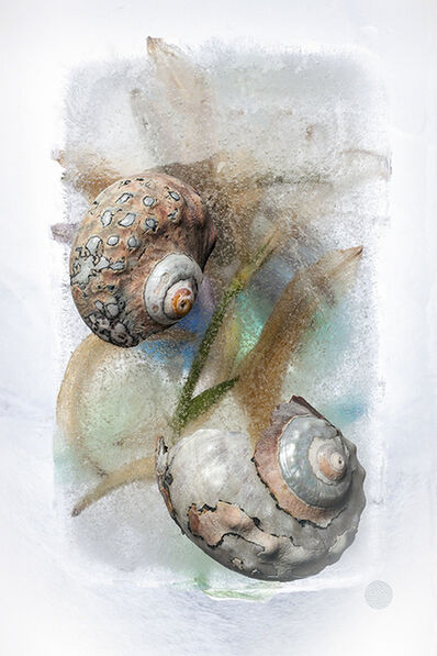 Joan Barker, 'Two Shells From Africa', 2014