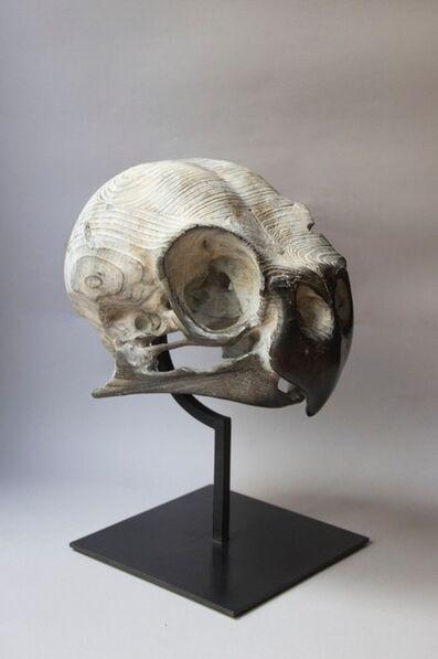 Quentin Garel, 'Crâne de Perruche ondulée', 2014