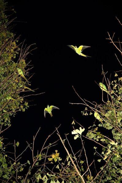 Yoshinori Mizutani, 'Tokyo Parrots 039', 2013