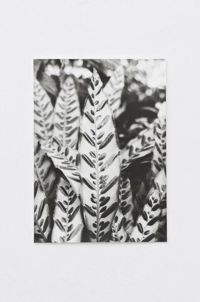 Jochen Lempert, 'Leaf (Painted)', 2013