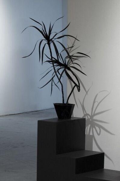 Simon Bilodeau, 'Plante #1', 2016