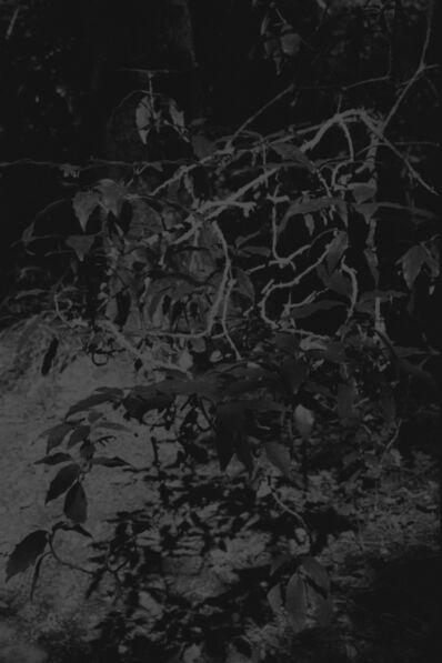 Daichi Koda, 'Forest 04', 2019