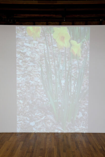 Phoebe Collings-James, 'The Rite of Spring', 2012