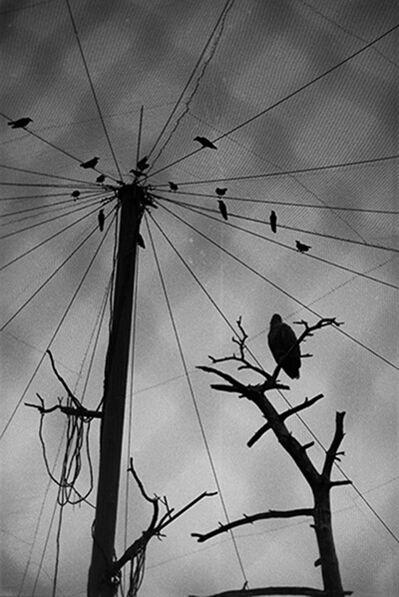 Wang Dongwei 王东伟, 'Net', 2000