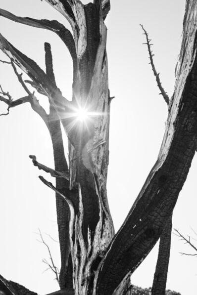 Bryson Rand, 'Bristlecone Pine I (Eagle, Colorado)', 2019