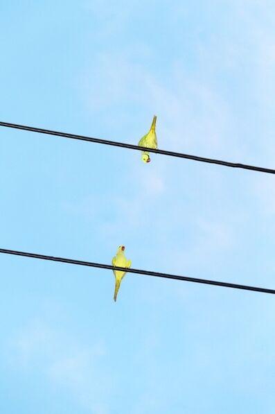 Yoshinori Mizutani, 'Tokyo Parrots 048', 2013