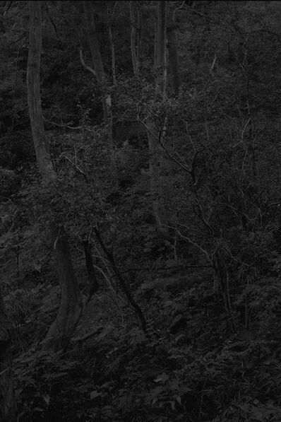 Daichi Koda, 'Forest 01', 2019