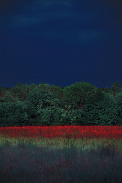 Erik Madigan Heck, 'Untitled, The Garden', 2019