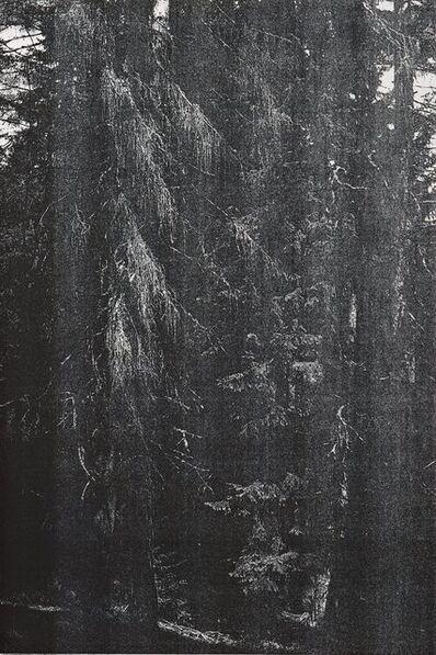 """Wolfgang Tillmans, '""""Wald"""" (""""Briol III"""")', 2008"""