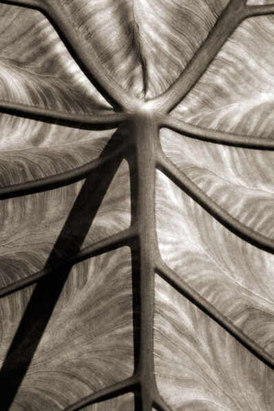 Cara Weston, 'Leaf and Shadow, Atlanta, GA', 2007