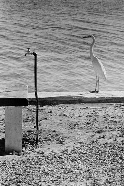 Elliott Erwitt, 'Florida', 1968