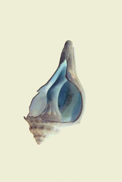Ayline Olukman, 'Shell invert', 2017