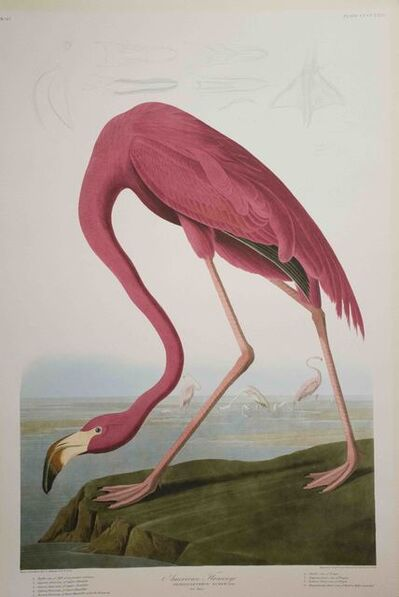 John James Audubon, 'American Flamingo, Edition Pl. 431', ca. 1999