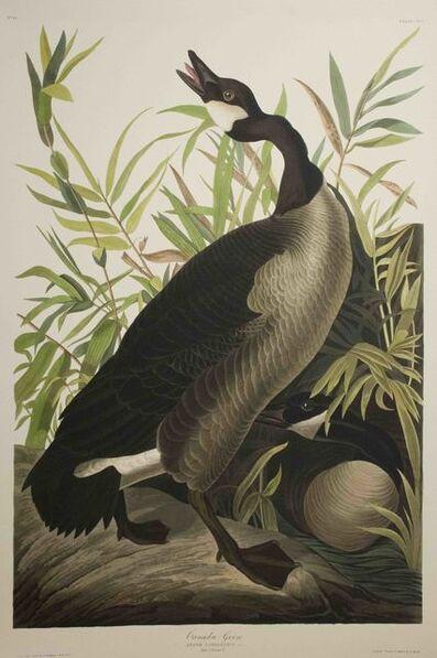 John James Audubon, 'Canada Goose, Edition Pl. 201', ca. 1999