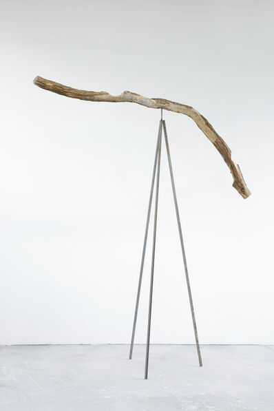Stella Hamberg, 'Robinie', 2017