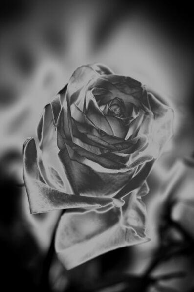 Indira Cesarine, 'Une Rose Fleurit en Argent', 2020