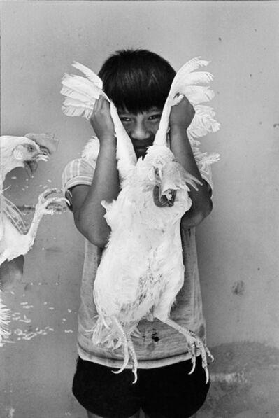 Graciela Iturbide, 'El Gallo (The Rooster), Juchitán, Oaxaca', 1986