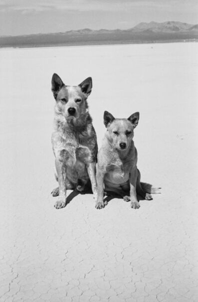 Arthur Elgort, 'Dogs, Death Valley, California', 2001