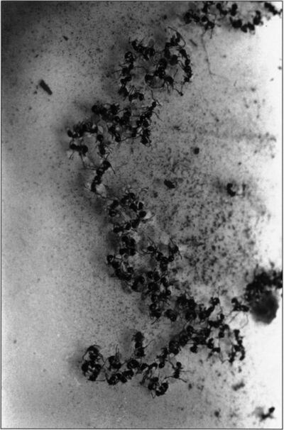Kikuji Kawada, 'Panic of the Ants, 1974', 1974