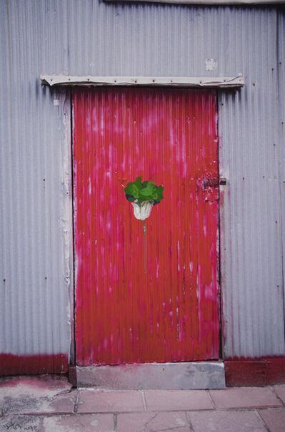 Honggoo Kang, 'Chinese Cabbage', 2015