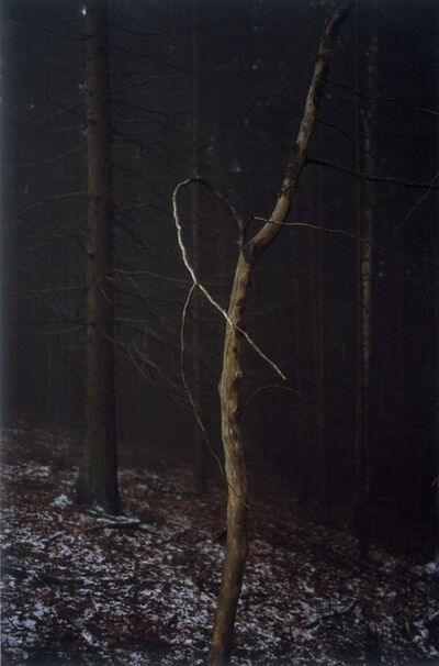 Jitka Hanzlová, 'Forest #4, Untitled (Dead Tree Dancing)', 2005