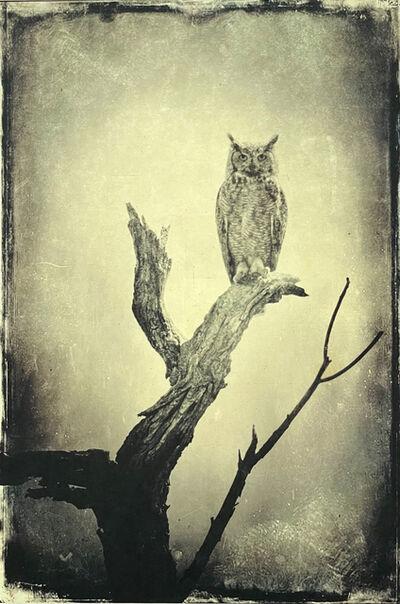 Wendi Schneider, 'Full Moon Owl', 2015